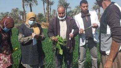 Photo of متابعة وفحص الزراعات الشتويه بمركز طامية.الفيوم