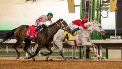"Photo of ""درواس ومغناج"" يحققان الفوز بسباقات كأس إمارة المدينة المنورة"