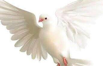 Photo of يا طائر خذني معك !!
