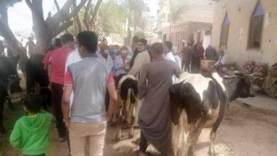 Photo of مؤجز لأهم أخبار سوهاج مؤجز متجدد لاهم أخبار الشارع السوهاجي