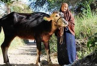 Photo of تسليم 3902 مشروعا انتاجيًا للأسر المعيلة والأولى بالرعاية في أسوان