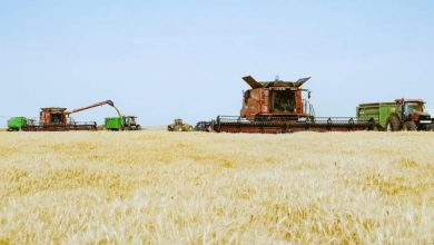 Photo of أشرف عطية : أسوان أول محافظة في حصاد وتوريد القمح