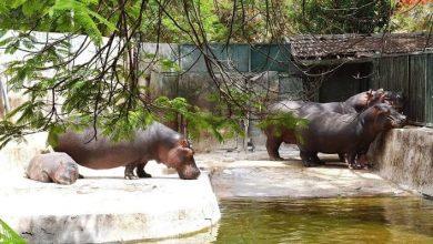 Photo of حدائق الحيوان والأرومان والأسماك خارج الخدمة