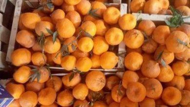 Photo of البرتقال اليوسفي