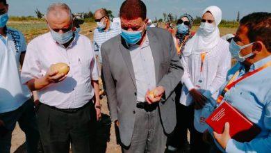 Photo of وكيل وزارة الزراعة بالبحيرة : يشهد يوم الحصاد لمحصول البطاطس بمركز أبو المطامير
