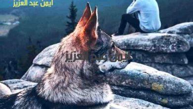 Photo of وفاء الحيوان وغدر الإنسان