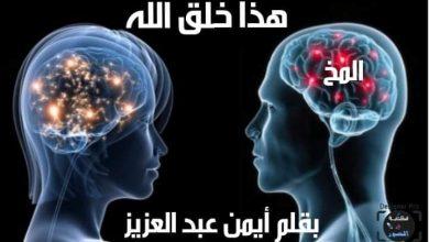 Photo of المخ
