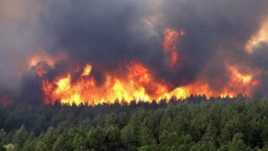 Photo of التفاصيل الكاملة لحرائق غابات الجزائر