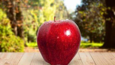Photo of التفاح أنبل الفواكه ..الجزء الثالث