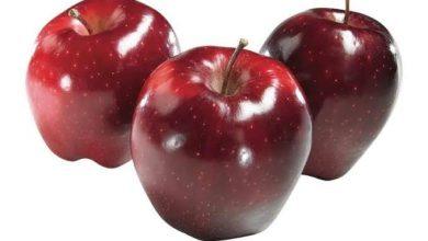 Photo of التفاح أنبل الفواكه …الجزء الرابع