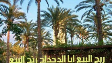 Photo of ربح البيع ابا الدحداح